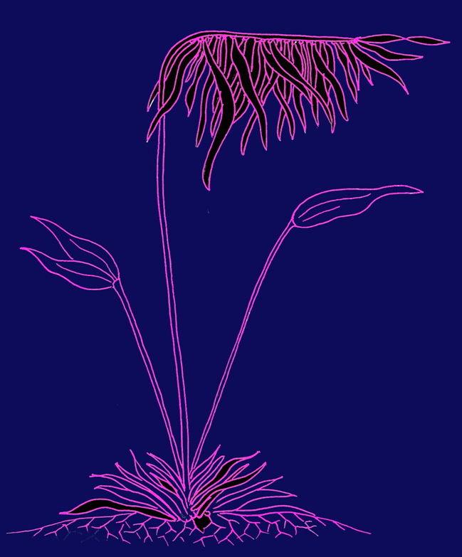 Alge invers - lila auf blau