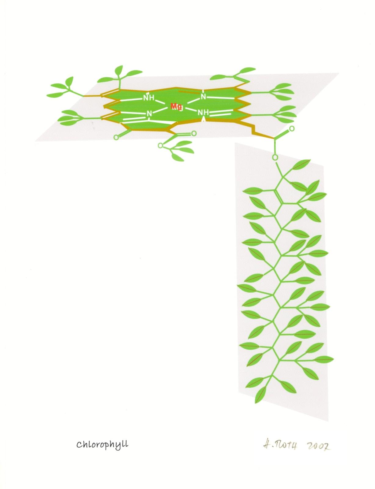 Chlorophyll-2007