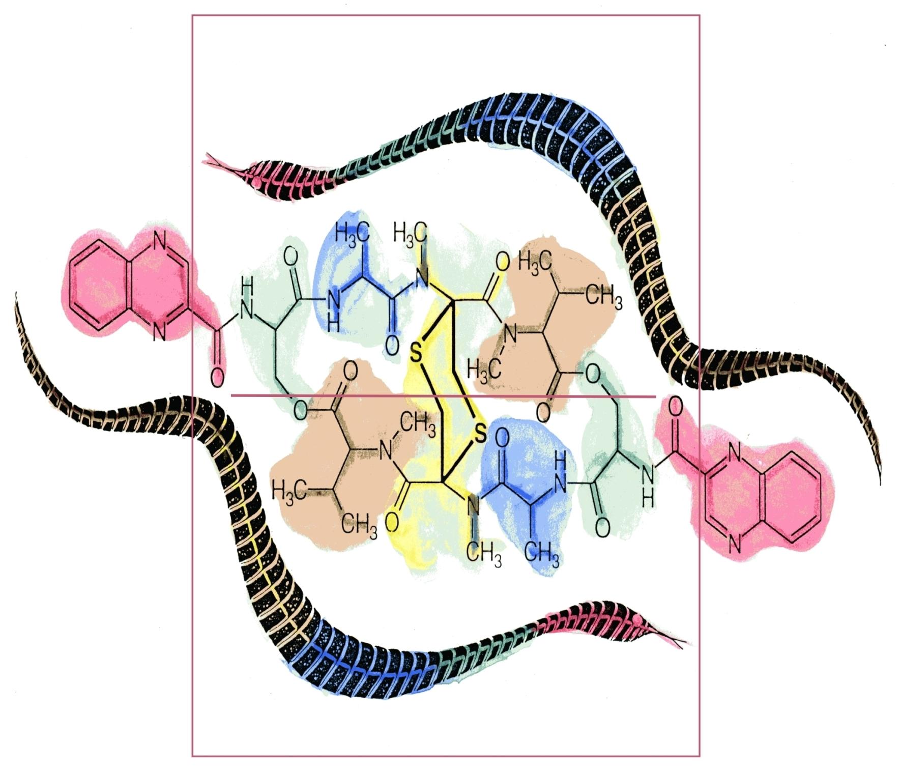 Echinomycin